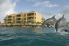 The Royal Sea Aquarium - Curacao